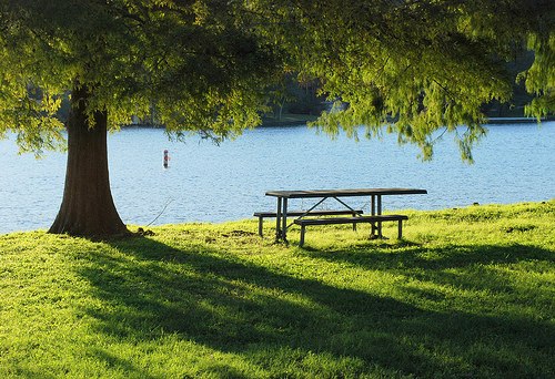 Top 5 Places For A Picnic In Austin Do512 Family
