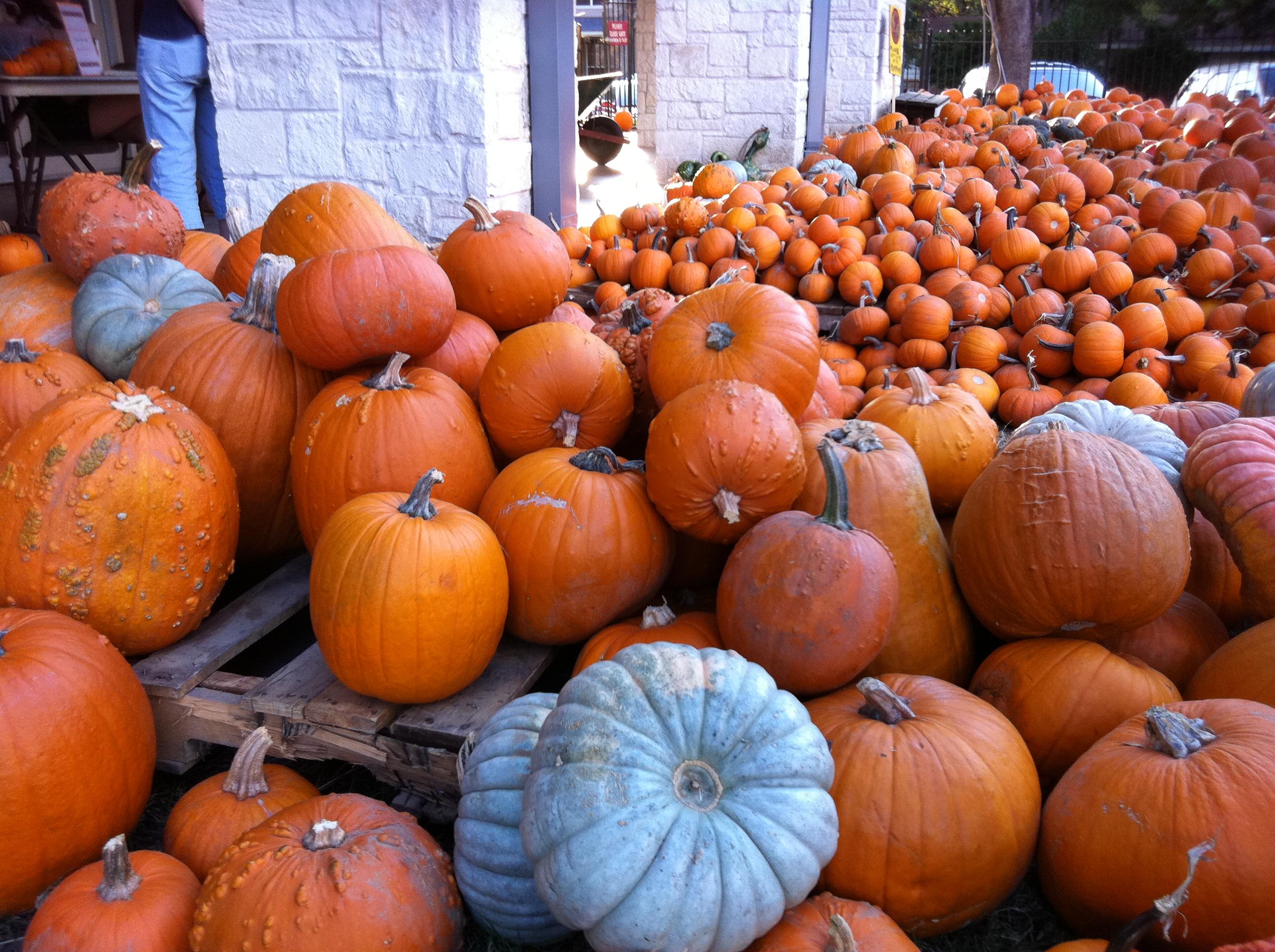 293 pumpkin patch 365 things to do in austin tx rh 365thingsaustin com